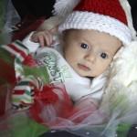 Dahlia_Christmas